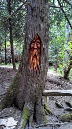 Woodspirit Carved In TREE!!!