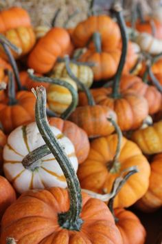 Mini pumpkins with curling stems Dulces Halloween, Fall Halloween, Mini Pumpkins, Fall Pumpkins, Harvest Time, Fall Harvest, Samhain, Pumpkin Stem, Pumpkin Pics