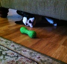 Good news: found my toy!  Bad news: I'm stuck.
