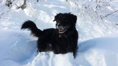 WagAware Snow Bunny Bellacitá making the most of the crazy weather! You go girl! Thank you so much for your sup-PAW-ort of rescue dogs!