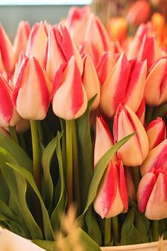 Tulips are truly one of my favorite all time flowers. A sign of new beginnings.