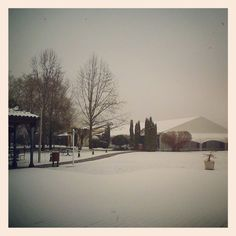"""""""White Snow"""". Photo by mrguasch"""