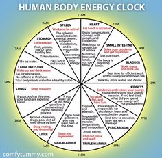 Infographic: Explore Your Human Body Energy Clock It's more of a Chinese medicine than Ayurveda. Reiki, Chinese Body Clock, Alternative Heilmethoden, Alternative Health Care, Health And Wellness, Health Fitness, Wellness Tips, Fitness Gear, Fitness Diet