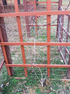How to prune grapevines (love the trellis, maybe not for grapes)