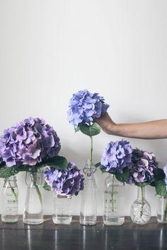 Hortensien in zartem Lila und Blau. #tollwasblumenmachen