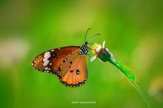 butterfly and baby