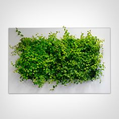 Compliment your home with the Grovert Living Wall Planter! This ghostwood frame kit wall garden will make you feel like its spring all year round. Living Wall Planter, Hanging Wall Planters, Indoor Planters, Autumn Interior, Live Picture, Modern Planters, Plant Art, Plant Holders, Fall Decor