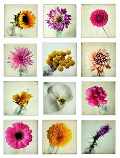 still life photography, flower photography, pink flambé, carnation photo, simple, flower print, girly, vintage bottle - 8x8 photograph
