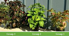 Learn how a group of Master Gardeners in a low-security correctional facility in Oregon used Cascade Minerals Remineralizing Soil Booster to grow healthier, more vibrant plants. #RockDust