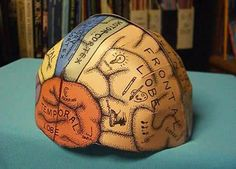 Brain Hemisphere Hat Paper Model - by Ellen McHenry  - == -  Ellen McHenry, designer of this very original paper models says the purpose of this model is help kids to learn about (or review) the major lobes of the brain by making a paper hat to wear.