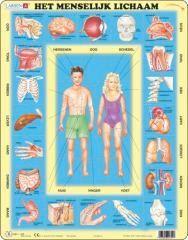 http://www.marktplaats.nl/a/kinderen-en-baby-s/speelgoed-puzzels/m763743419-larsen-puzzel-het-menselijk-lichaam.html?c=d721e818194200feca4409741512b6e6&previousPage=mympSeller