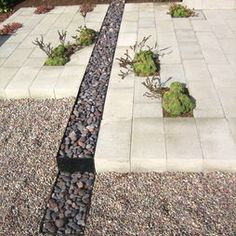 gravel + paver + small dash of green = efficient and interesting