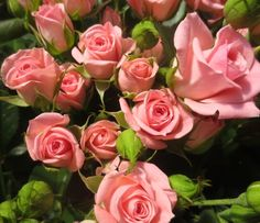 Odilia Fragrant Roses, Spray Roses, Flower Power, Wedding Events, Wedding Flowers, Plants