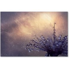 Trademark Fine Art All the Good Wishes Canvas Art by Beata Czyzowska Young, Size: 30 x 47, Multicolor