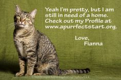 Fianna is in need of a home.  Please check her out at www.apurrfectstart.org