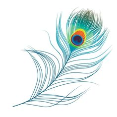 Find Peacock Plume stock images in HD and millions of other royalty-free stock photos, illustrations and vectors in the Shutterstock collection. Peacock Feather Tattoo, Feather Drawing, Feather Art, Feather Tattoos, Peacock Feathers Drawing, Feather Vector, Bird Tattoos, Peacock Painting, Peacock Art