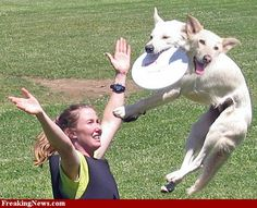 Dog Frisbee pictures