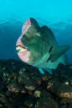 Monster Shark, Monster Fishing, Underwater Animals, Underwater Life, Deep Sea Creatures, Weird Creatures, Ocean Monsters, Funny Wild Animals, Interesting Animals