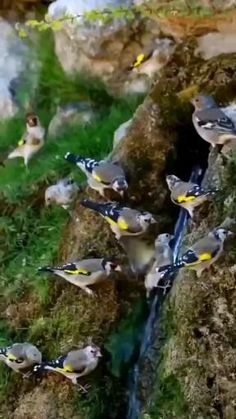Beautiful Nature Pictures, Beautiful Gif, Beautiful Roses, Majestic Animals, Animals Beautiful, Wild Animals Videos, Self Watering Plants, Different Birds, Nature Gif