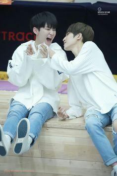 Hoshi wonwoo cute couple