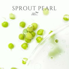 Organic pea sprouts with lid of SproutPearl sprouter by FRESH SPROUTS