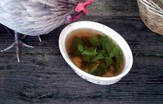 Herbal Tea for the Flock.  Oregano is supposed to combat coccidia, salmonella, infectious bronchitis, avian flue, blackhead and e-coli. My herb garden is going to be moved closer to their run . . . more great information!