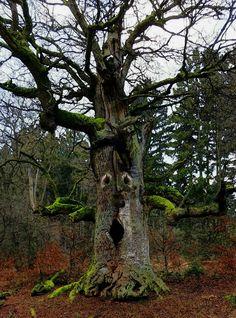 """Aus dem Buch """"Die Gesellschaft der Bäume"""""""