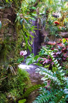 Tropical Waterfalls   Tropical Waterfall by ~DemonIllusion on deviantART