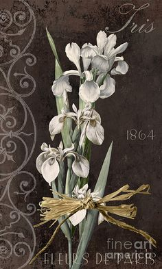 Iris Painting - Fleurs De Paris II by Mindy Sommers