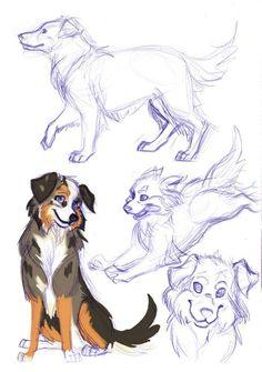 Australian Shepherd #DogSketch