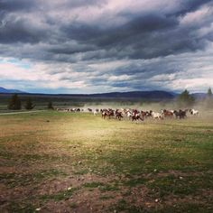 Wyoming cattle drive. (Gahhhhh goin nuts now!) Been there ... done that for 12 years. Love that dust!