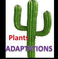 Plant Adaptations Lesson with Quiz