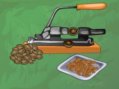 How to Harvest Pecan