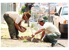 Cássia: Secretaria promove plantio de árvores http://www.passosmgonline.com/index.php/2014-01-22-23-07-47/regiao/3829-cassia-secretaria-promove-plantio-de-arvores