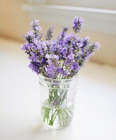 lavender | elephantineblog.com