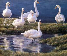[EndLiss scans - Wildlife Art] Robert Bateman - Bank of Swans