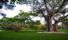 Matheson Hammock Park - Miami Parks & Recreation
