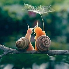When you have become a snail in your second life. You might have that honeymoon feeling still. These two lovely snails just did that. Remembering the times when Cute Creatures, Beautiful Creatures, Animals Beautiful, Nature Animals, Animals And Pets, Cute Baby Animals, Funny Animals, Animal Pictures, Cute Pictures