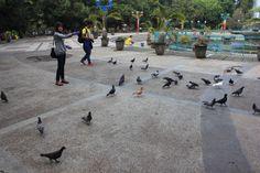 Alun-alun Kota Malang, Jawa Timur