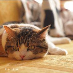 Photo by tiaichima