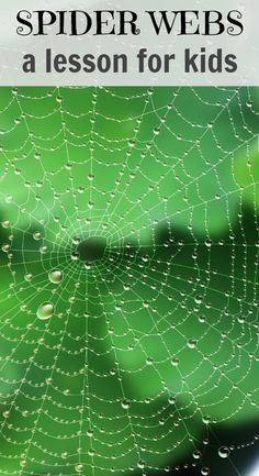 Spider Unit for Kids: This post includes ideas for learning about spiders with kids. Exploring spider webs can be loads of fun and super interesting! Kids will love it!