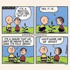 #peanutsspecials #pnts #peanuts #schulz #charliebrown #linus #beautiful #littletree #shame #fullygrown