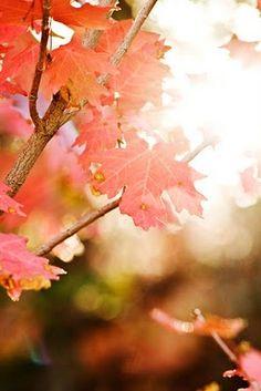 Sunlight through the autumn trees.