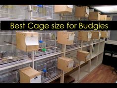 Best Cage size for Budgies - What is Best size for Breeding ? Breeding Budgies, Whats Good, Bird Cages, Livestock, Farming, Fitness Motivation, Birds, Youtube, Diy