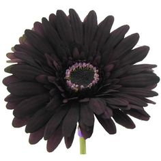 """Add color and texture to your floral arrangements with theBotanic Artistry Plum Gerbera Daisy    The spray is about 24"""" long and the flower is 4"""" in diameter."""