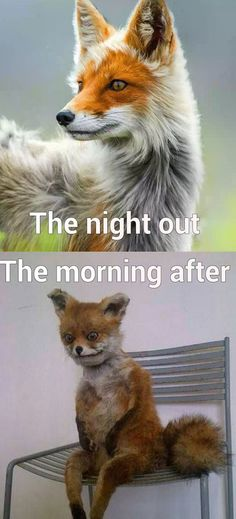 The night out versus the morning after.