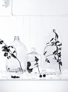"""Fordi jeg elsker alt som har med planter å gjøre. Her i et """"dødt"""" stilleben."""