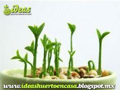 Reciclando limones: Plantando sus semillas. - Taringa!