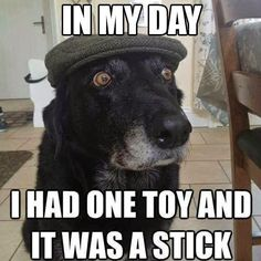 101 Funny Dog Memes Almost Guaranteed to Make You Laugh All Day - Funny Dog Quotes - 101 best funny dog memes In my day I had one toy and it was a stick. The post 101 Funny Dog Memes Almost Guaranteed to Make You Laugh All Day appeared first on Gag Dad. Funny Animal Jokes, Funny Dog Memes, Cute Funny Animals, Funny Animal Pictures, Cute Baby Animals, Funny Cute, Dog Pictures, Funny Dogs, Dog Humor