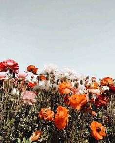 69 Ideas Vintage Nature Photography Flowers Gardens For 2019 Vintage Nature Photography, Summer Nature Photography, Photography Flowers, Fred Instagram, Wild Flowers, Beautiful Flowers, Bouquet Flowers, Wedding Flowers, Deco Floral